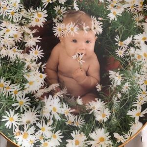 Anne Geddes DAISY BABY Porcelain Plate